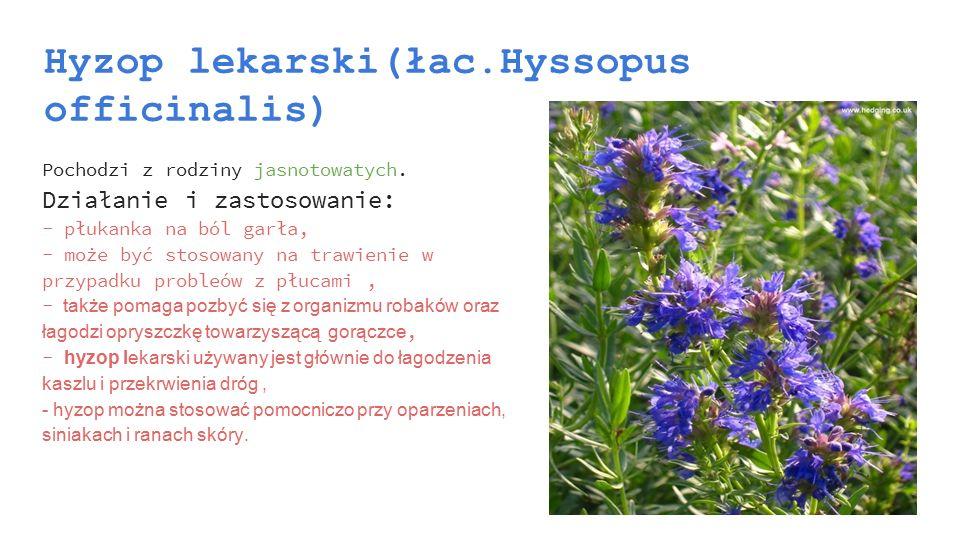Hyzop lekarski(łac.Hyssopus officinalis) Pochodzi z rodziny jasnotowatych. Działanie i zastosowanie: - płukanka na ból garła, - może być stosowany na