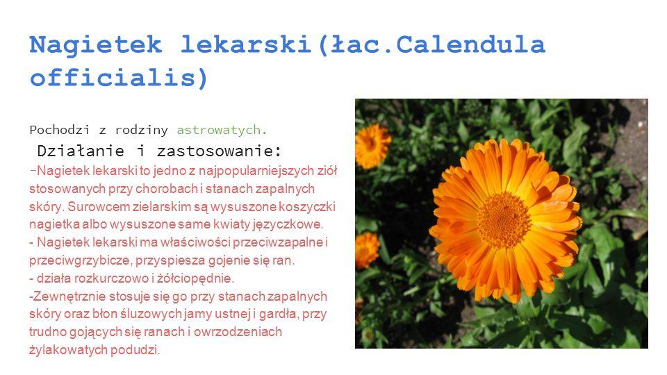 Nagietek lekarski(łac.Calendula officialis) Pochodzi z rodziny astrowatych. Działanie i zastosowanie: - Nagietek lekarski to jedno z najpopularniejszy