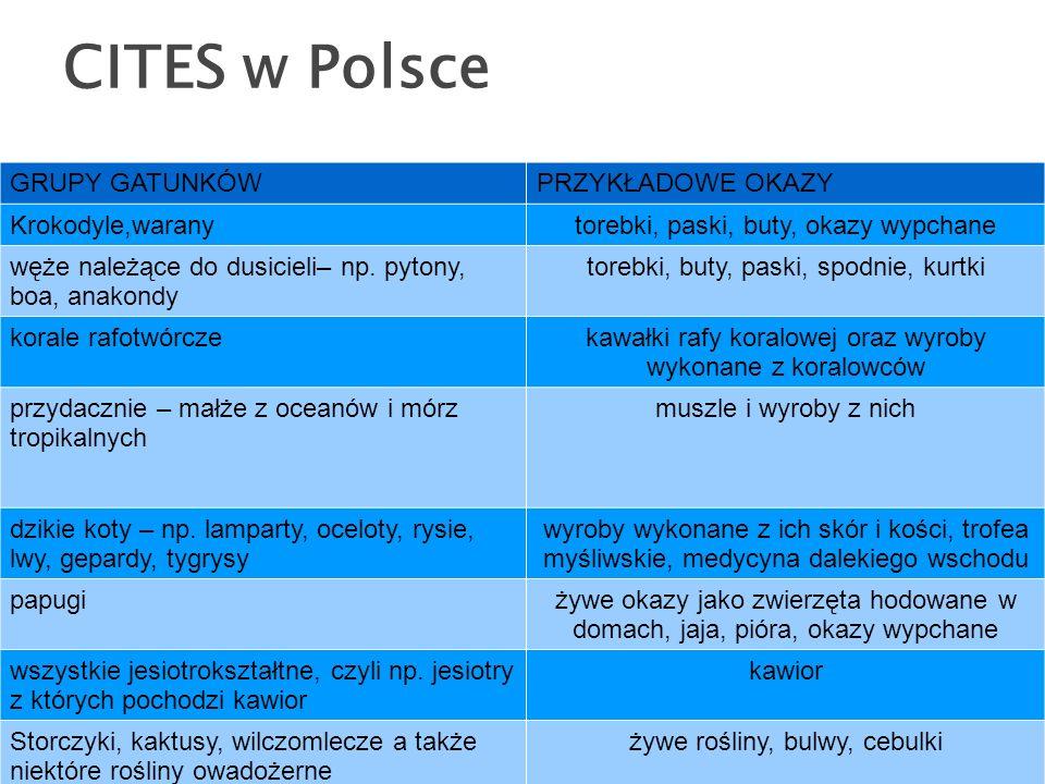 CITES w Polsce GRUPY GATUNKÓWPRZYKŁADOWE OKAZY Krokodyle,waranytorebki, paski, buty, okazy wypchane węże należące do dusicieli– np.