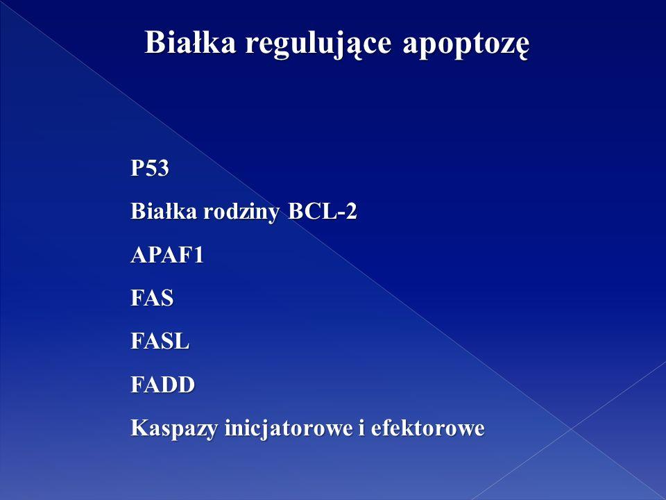 Białka regulujące apoptozę Białka regulujące apoptozę P53 Białka rodziny BCL-2 APAF1FASFASLFADD Kaspazy inicjatorowe i efektorowe