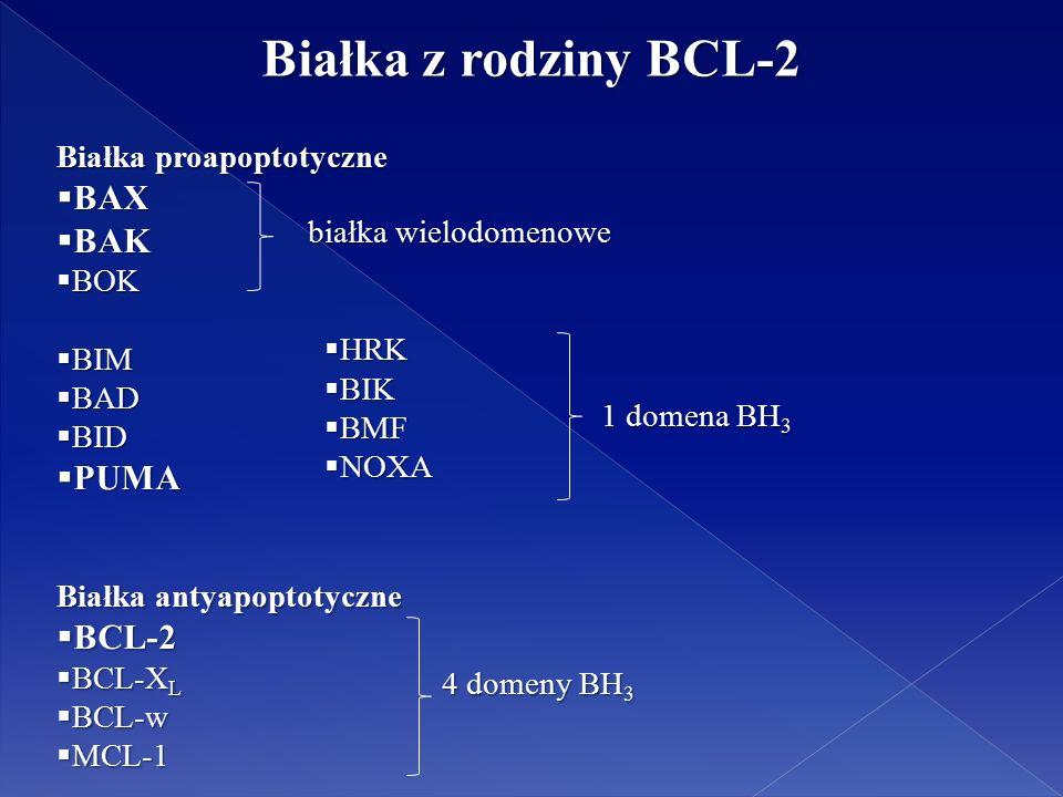 Białka z rodziny BCL-2 Białka proapoptotyczne  BAX  BAK  BOK  BIM  BAD  BID  PUMA Białka antyapoptotyczne  BCL-2  BCL-X L  BCL-w  MCL-1 1 domena BH 3  HRK  BIK  BMF  NOXA białka wielodomenowe 4 domeny BH 3