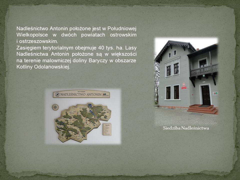 Nadleśnictwo Antonin położone jest w Południowej Wielkopolsce w dwóch powiatach ostrowskim i ostrzeszowskim.