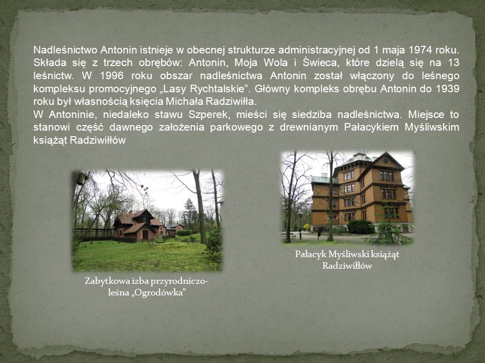Nadleśnictwo Antonin istnieje w obecnej strukturze administracyjnej od 1 maja 1974 roku.