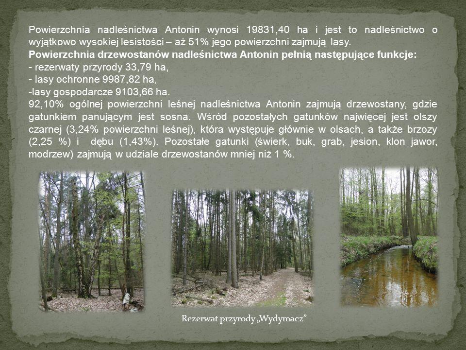 Powierzchnia nadleśnictwa Antonin wynosi 19831,40 ha i jest to nadleśnictwo o wyjątkowo wysokiej lesistości – aż 51% jego powierzchni zajmują lasy.