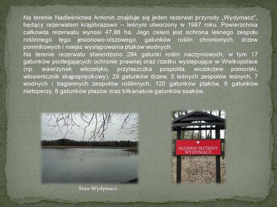 """Na terenie Nadleśnictwa Antonin znajduje się jeden rezerwat przyrody """"Wydymacz , będący rezerwatem krajobrazowo – leśnym utworzony w 1987 roku."""