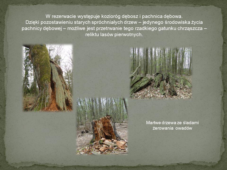 Las to najcenniejszy i najliczniej reprezentowany składnik wszystkich form ochrony krajobrazu.