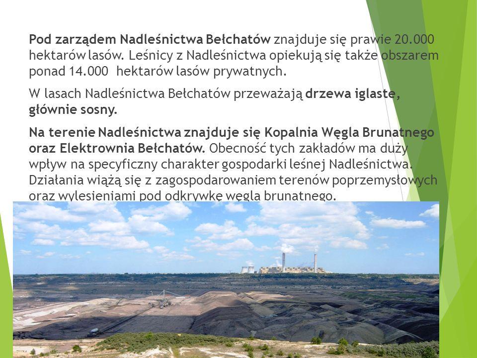 Pod zarządem Nadleśnictwa Bełchatów znajduje się prawie 20.000 hektarów lasów.