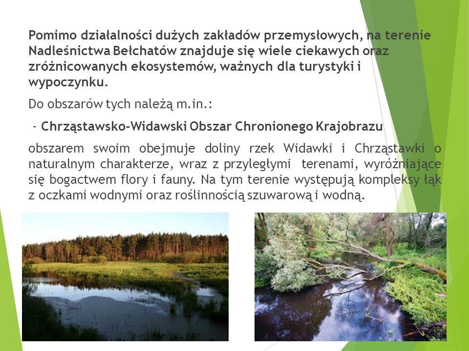 Pomimo działalności dużych zakładów przemysłowych, na terenie Nadleśnictwa Bełchatów znajduje się wiele ciekawych oraz zróżnicowanych ekosystemów, ważnych dla turystyki i wypoczynku.
