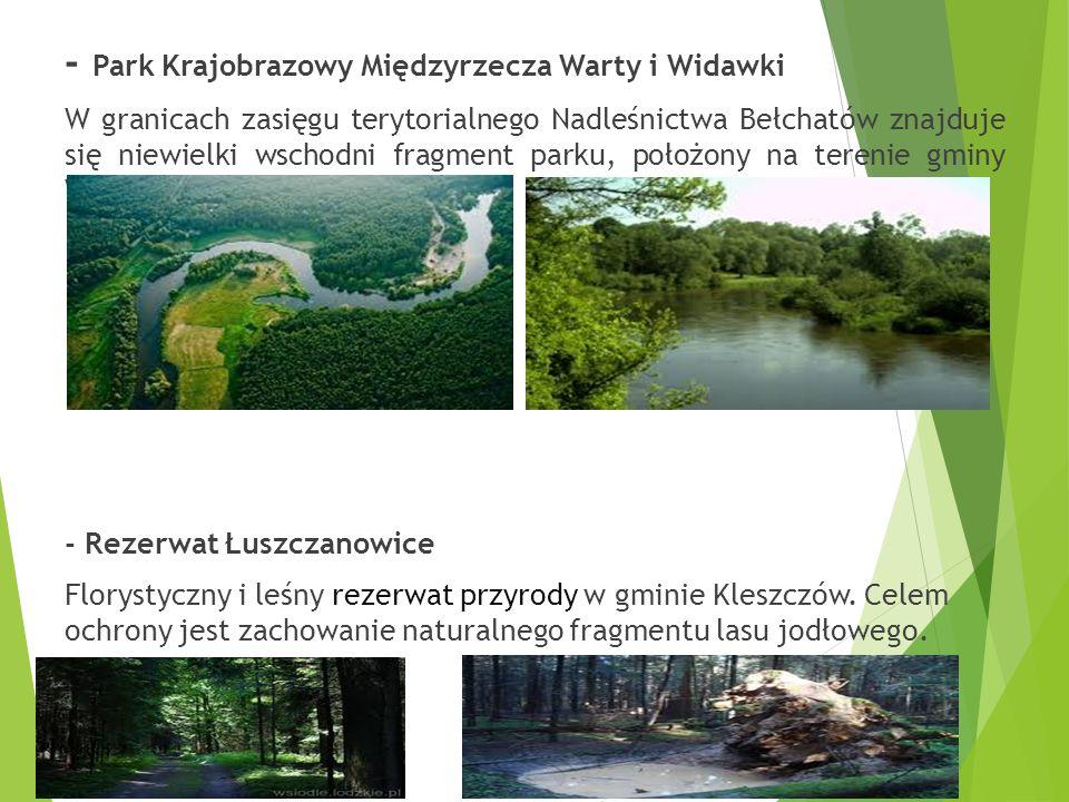 - Park Krajobrazowy Międzyrzecza Warty i Widawki W granicach zasięgu terytorialnego Nadleśnictwa Bełchatów znajduje się niewielki wschodni fragment parku, położony na terenie gminy Widawa.