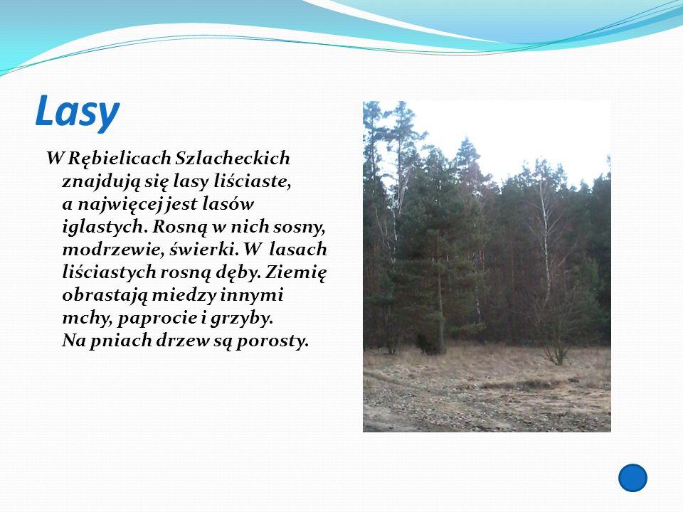Lasy W Rębielicach Szlacheckich znajdują się lasy liściaste, a najwięcej jest lasów iglastych. Rosną w nich sosny, modrzewie, świerki. W lasach liścia