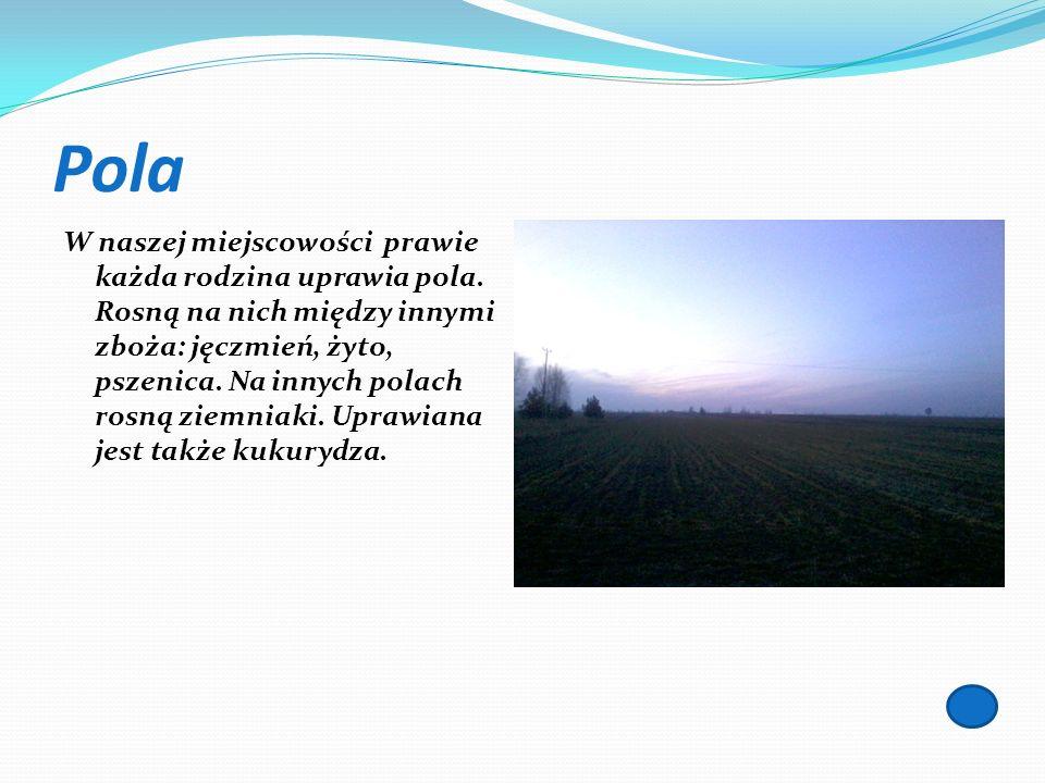 Pola W naszej miejscowości prawie każda rodzina uprawia pola. Rosną na nich między innymi zboża: jęczmień, żyto, pszenica. Na innych polach rosną ziem