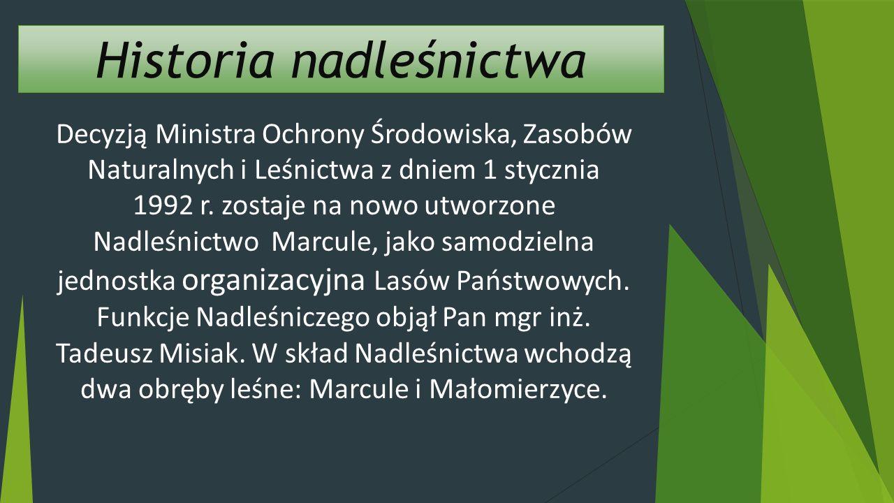 Decyzją Ministra Ochrony Środowiska, Zasobów Naturalnych i Leśnictwa z dniem 1 stycznia 1992 r.