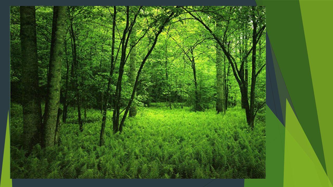 Użytkowanie lasu Drewno pozyskane na terenie Nadleśnictwa Marcule trafia głównie do przedsiębiorstw zajmujących się dalszym przerobem tego surowca: tartaków, zakładów przemysłu celulozowo-papierniczego, fabryk mebli, zakładów produkcji sklejek oraz mniejszych zakładów stolarskich.