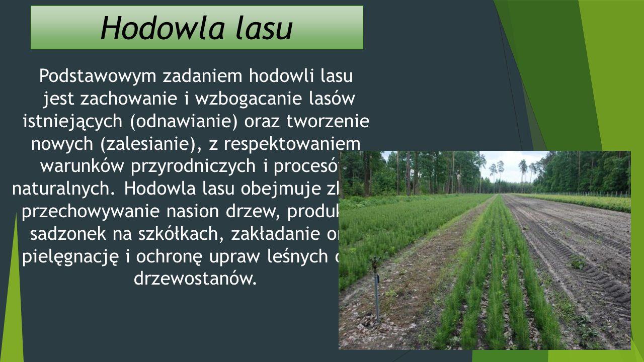 Hodowla lasu Podstawowym zadaniem hodowli lasu jest zachowanie i wzbogacanie lasów istniejących (odnawianie) oraz tworzenie nowych (zalesianie), z respektowaniem warunków przyrodniczych i procesów naturalnych.