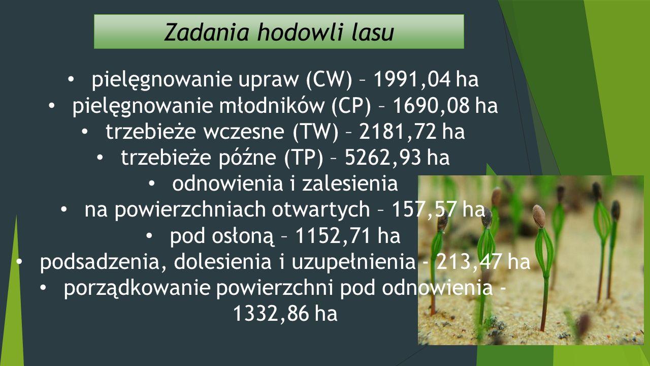 Zadania hodowli lasu pielęgnowanie upraw (CW) – 1991,04 ha pielęgnowanie młodników (CP) – 1690,08 ha trzebieże wczesne (TW) – 2181,72 ha trzebieże późne (TP) – 5262,93 ha odnowienia i zalesienia na powierzchniach otwartych – 157,57 ha pod osłoną – 1152,71 ha podsadzenia, dolesienia i uzupełnienia - 213,47 ha porządkowanie powierzchni pod odnowienia - 1332,86 ha Kliknij, aby dodać tekst