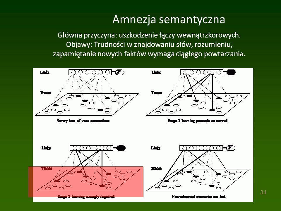 34 Amnezja semantyczna Główna przyczyna: uszkodzenie łączy wewnątrzkorowych.