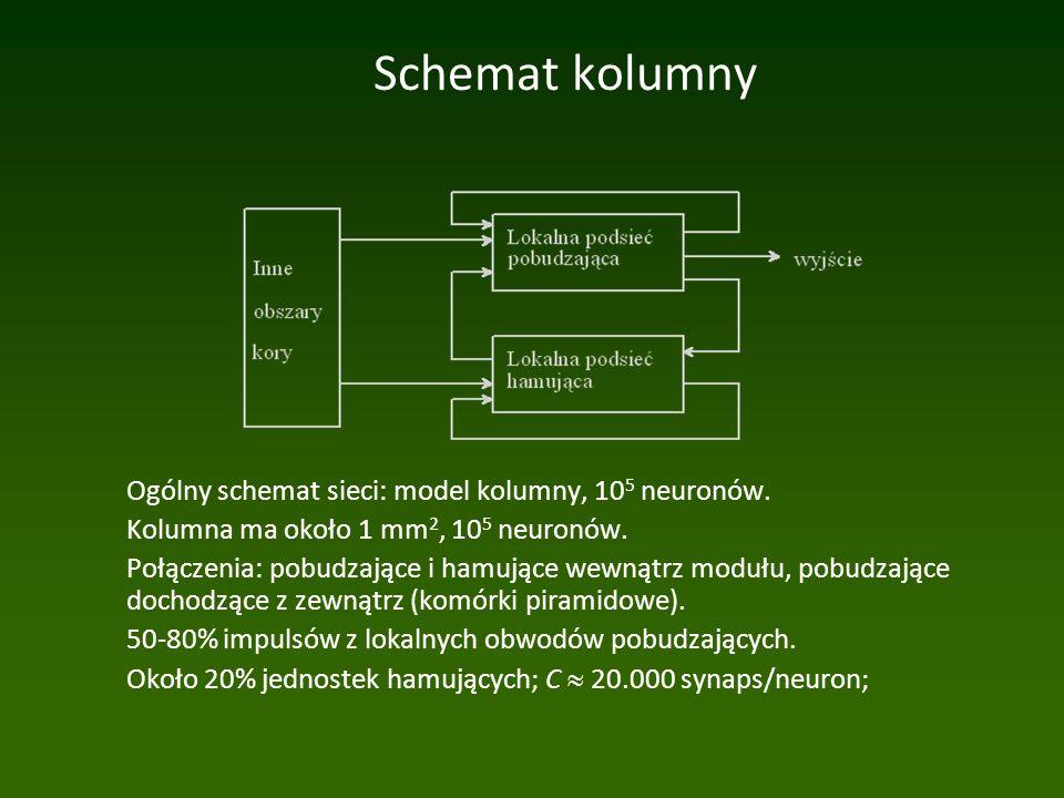 Schemat kolumny Ogólny schemat sieci: model kolumny, 10 5 neuronów.
