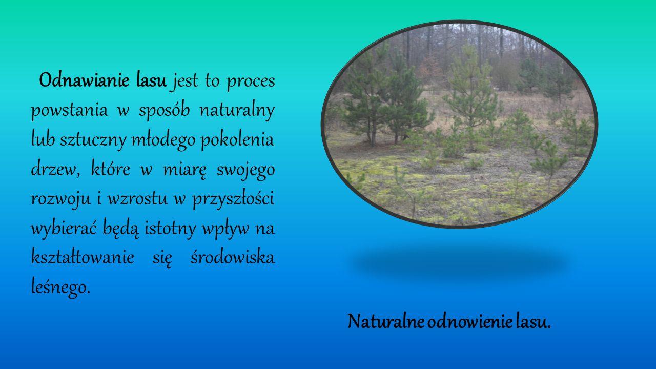 Lasy Nadleśnictwa Płock położone są w dwóch krainach przyrodniczo - leśnych: I Krainie Wielkopolsko-Pomorskiej w 3 Dzielnicy Pojezierza Chełmińsko Dob