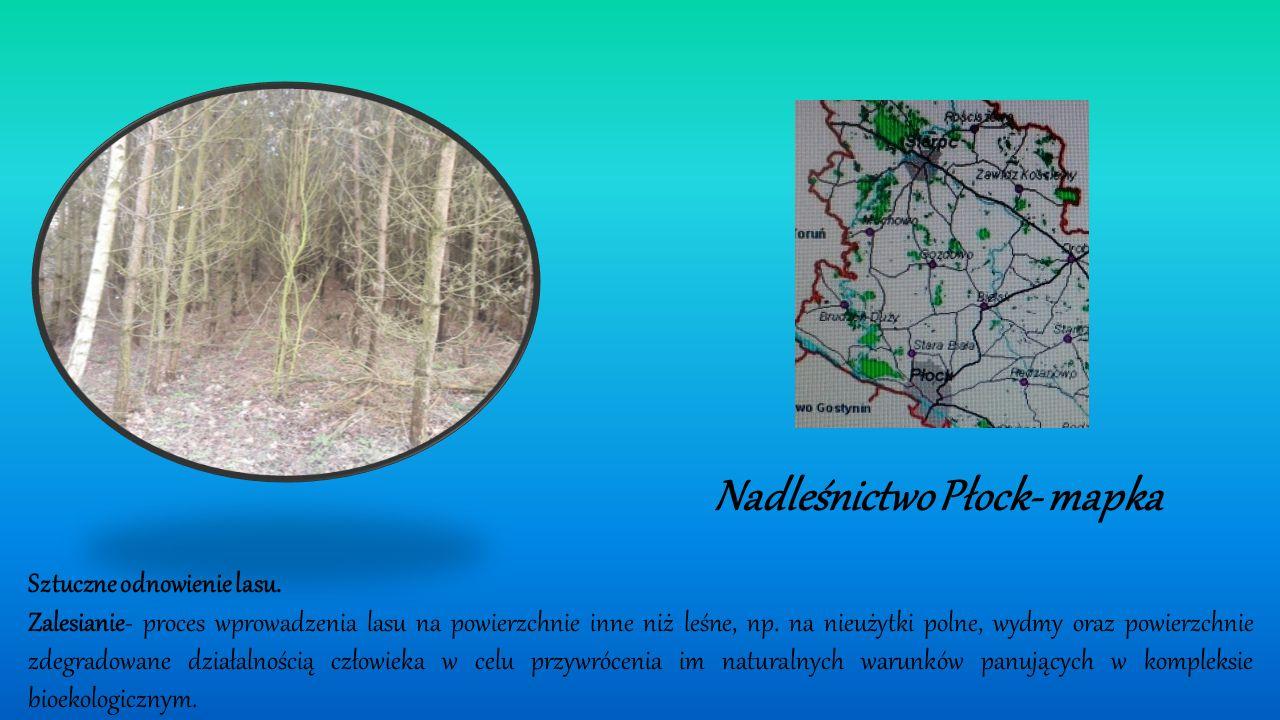 Sztuczne odnowienie lasu.Zalesianie- proces wprowadzenia lasu na powierzchnie inne niż leśne, np.