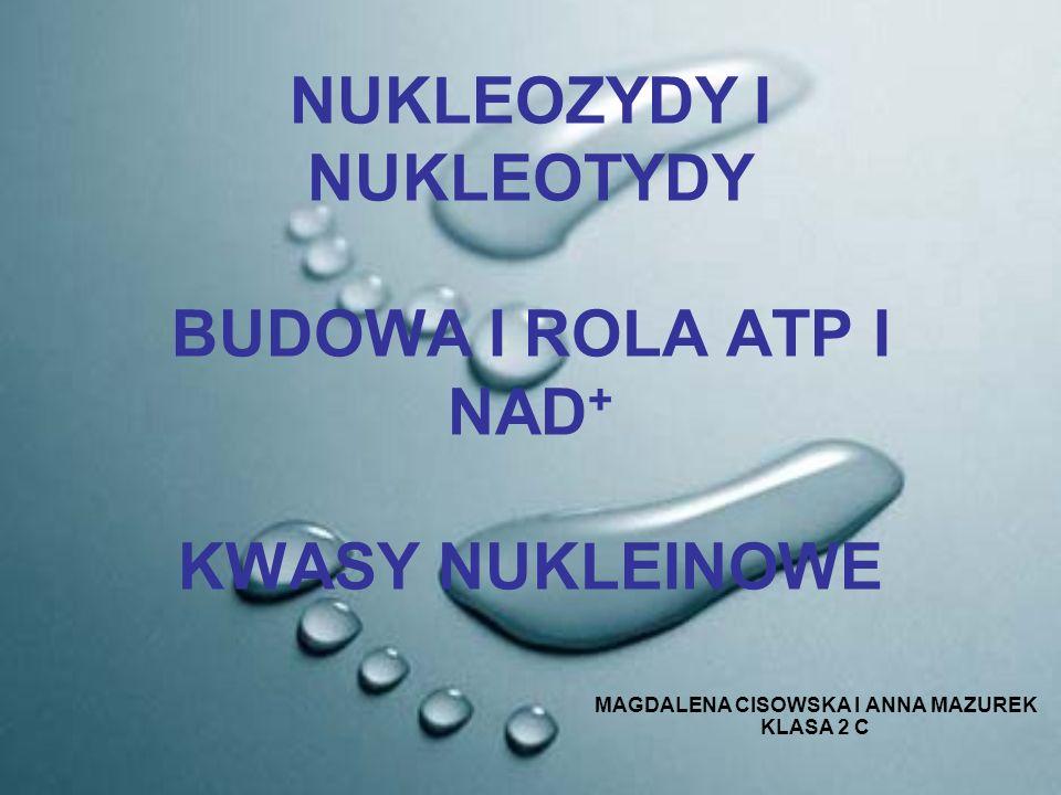 NUKLEOZYDY I NUKLEOTYDY BUDOWA I ROLA ATP I NAD + KWASY NUKLEINOWE MAGDALENA CISOWSKA I ANNA MAZUREK KLASA 2 C