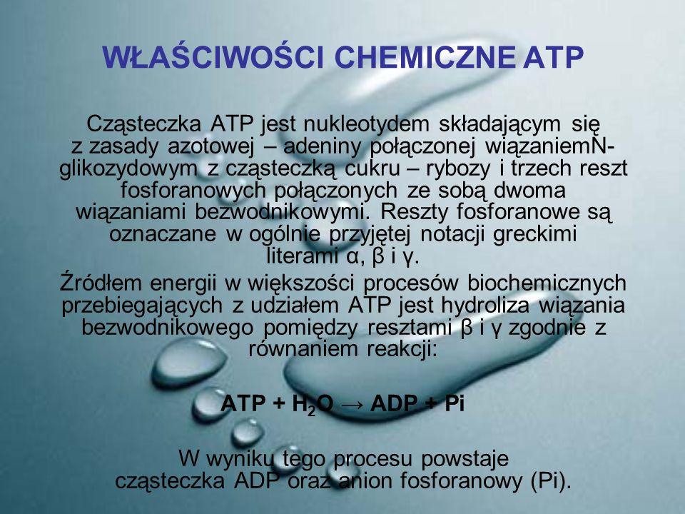 WŁAŚCIWOŚCI CHEMICZNE ATP Cząsteczka ATP jest nukleotydem składającym się z zasady azotowej – adeniny połączonej wiązaniemN- glikozydowym z cząsteczką