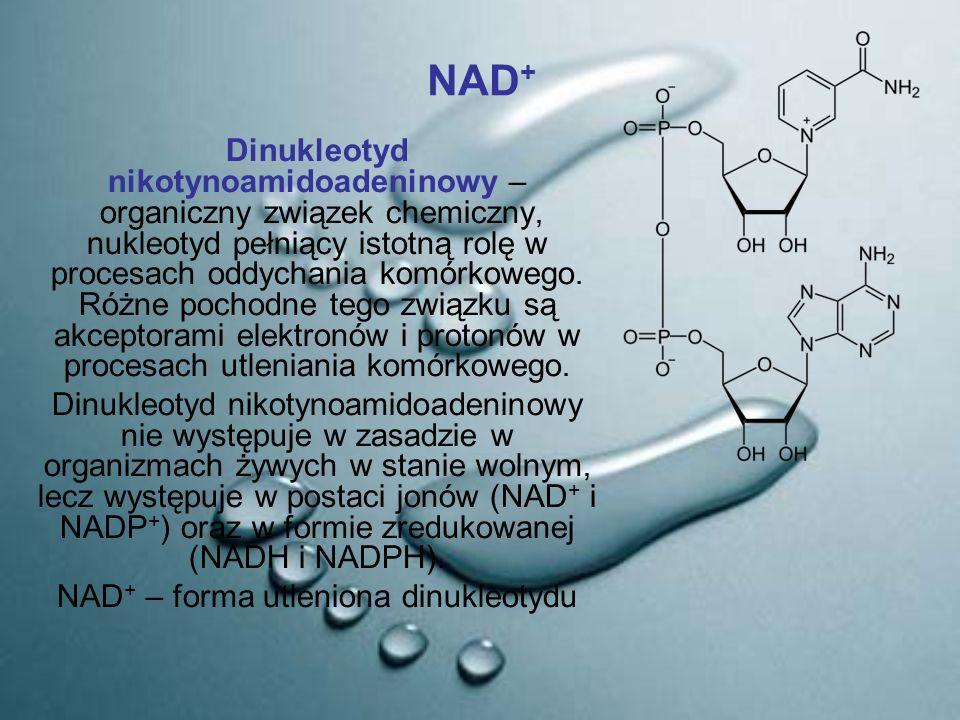 NAD + Dinukleotyd nikotynoamidoadeninowy – organiczny związek chemiczny, nukleotyd pełniący istotną rolę w procesach oddychania komórkowego. Różne poc