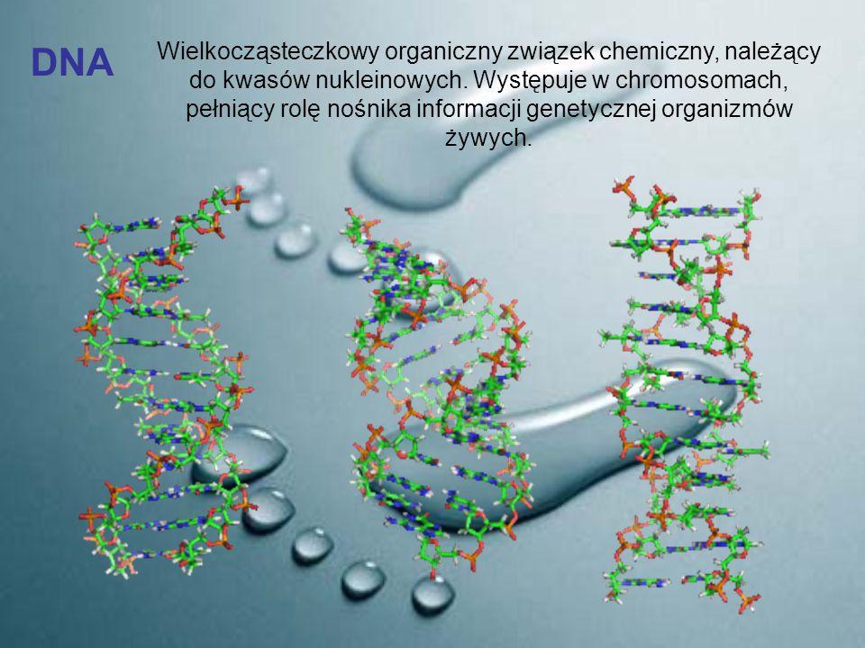 DNA Wielkocząsteczkowy organiczny związek chemiczny, należący do kwasów nukleinowych. Występuje w chromosomach, pełniący rolę nośnika informacji genet
