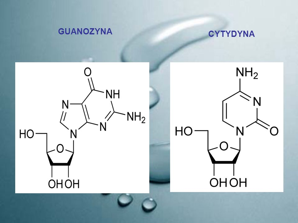 Fragment cząsteczki RNA