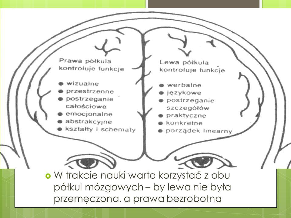  W trakcie nauki warto korzystać z obu półkul mózgowych – by lewa nie była przemęczona, a prawa bezrobotna