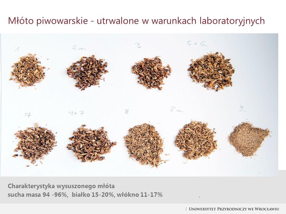 Charakterystyka wysuszonego młóta sucha masa 94 -96%, białko 15-20%, włókno 11-17%, Młóto piwowarskie - utrwalone w warunkach laboratoryjnych