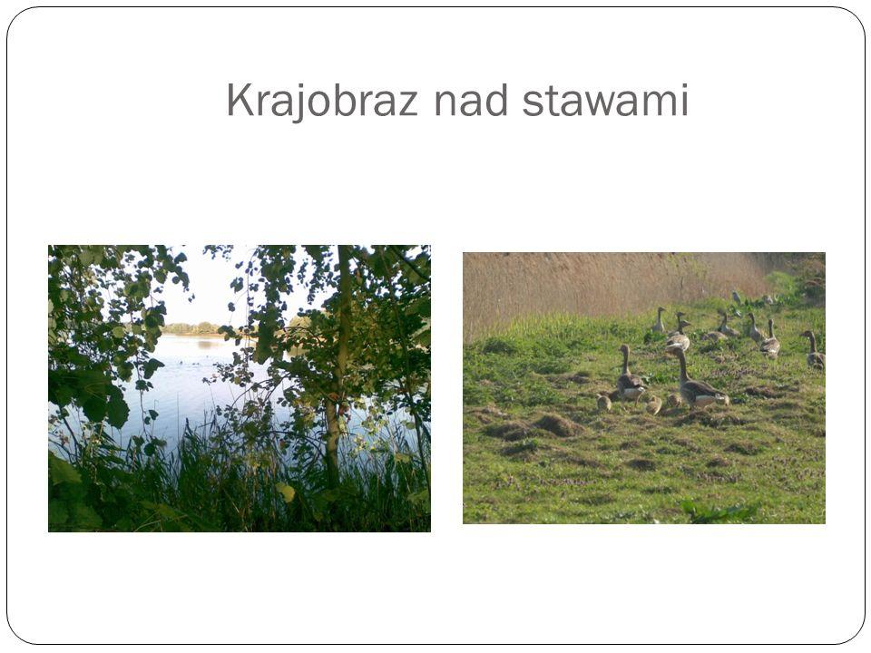 Krajobraz nad stawami