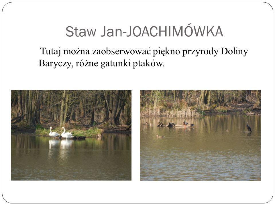 Staw Jan-JOACHIMÓWKA Tutaj można zaobserwować piękno przyrody Doliny Baryczy, różne gatunki ptaków.