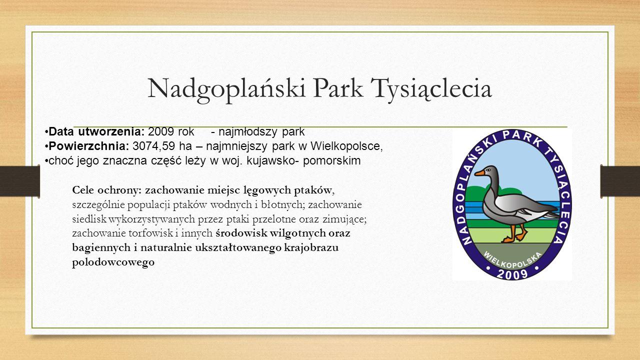 Nadgoplański Park Tysiąclecia Data utworzenia: 2009 rok - najmłodszy park Powierzchnia: 3074,59 ha – najmniejszy park w Wielkopolsce, choć jego znaczna część leży w woj.