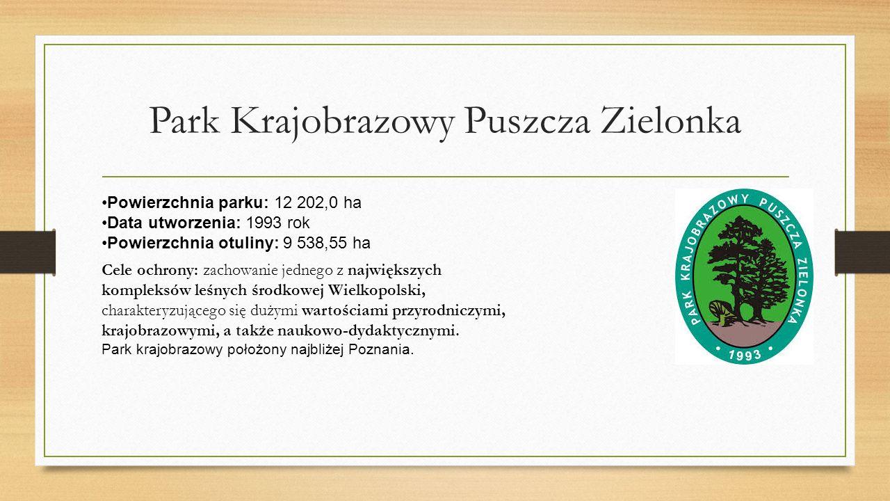Park Krajobrazowy Puszcza Zielonka Powierzchnia parku: 12 202,0 ha Data utworzenia: 1993 rok Powierzchnia otuliny: 9 538,55 ha Cele ochrony: zachowanie jednego z największych kompleksów leśnych środkowej Wielkopolski, charakteryzującego się dużymi wartościami przyrodniczymi, krajobrazowymi, a także naukowo-dydaktycznymi.