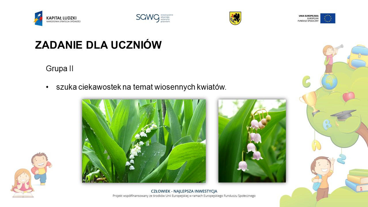 ZADANIE DLA UCZNIÓW Grupa II szuka ciekawostek na temat wiosennych kwiatów.