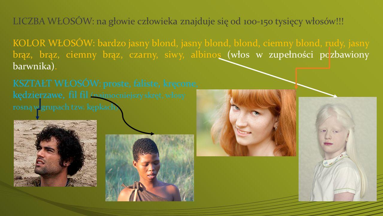 LICZBA WŁOSÓW: na głowie człowieka znajduje się od 100-150 tysięcy włosów!!! KOLOR WŁOSÓW: bardzo jasny blond, jasny blond, blond, ciemny blond, rudy,