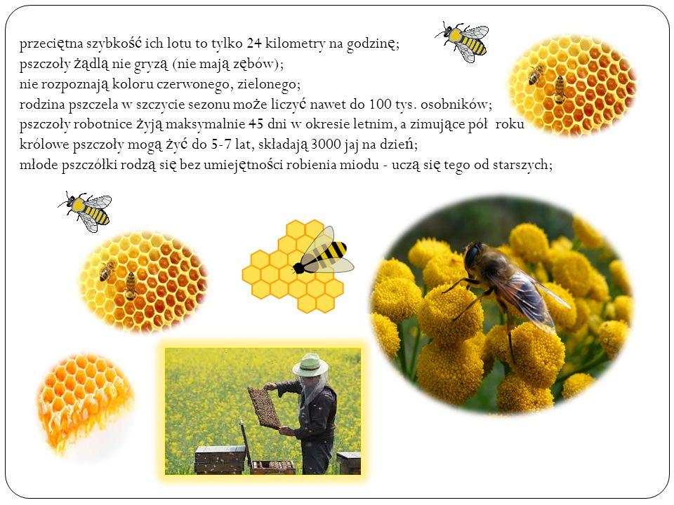 Dzieci składaj ą podzi ę kowanie za niezwykłe, interesuj ą ce spotkanie panu Leszkowi wr ę czaj ą c album z ilustracjami pszczół malowanych przez uczniów klasy II i obrazek z postaci ą pszczółki Mai od pi ę ciolatków.