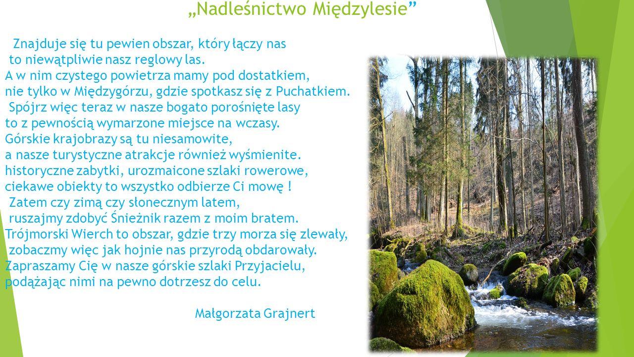 Najważniejsze informacje :  Nadleśnictwo Międzylesie wchodzi w skład Regionalnej Dyrekcji Lasów Państwowych we Wrocławiu.