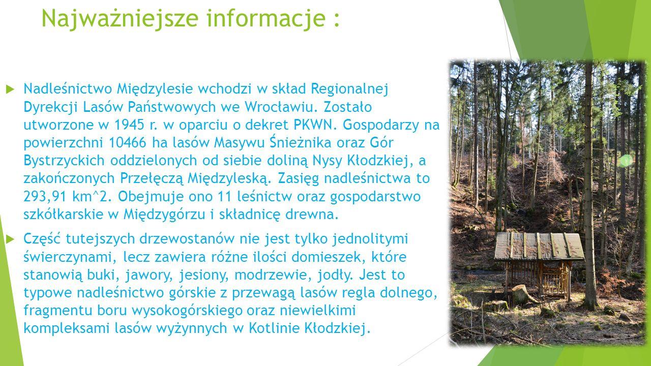 Najważniejsze informacje :  Nadleśnictwo Międzylesie wchodzi w skład Regionalnej Dyrekcji Lasów Państwowych we Wrocławiu. Zostało utworzone w 1945 r.