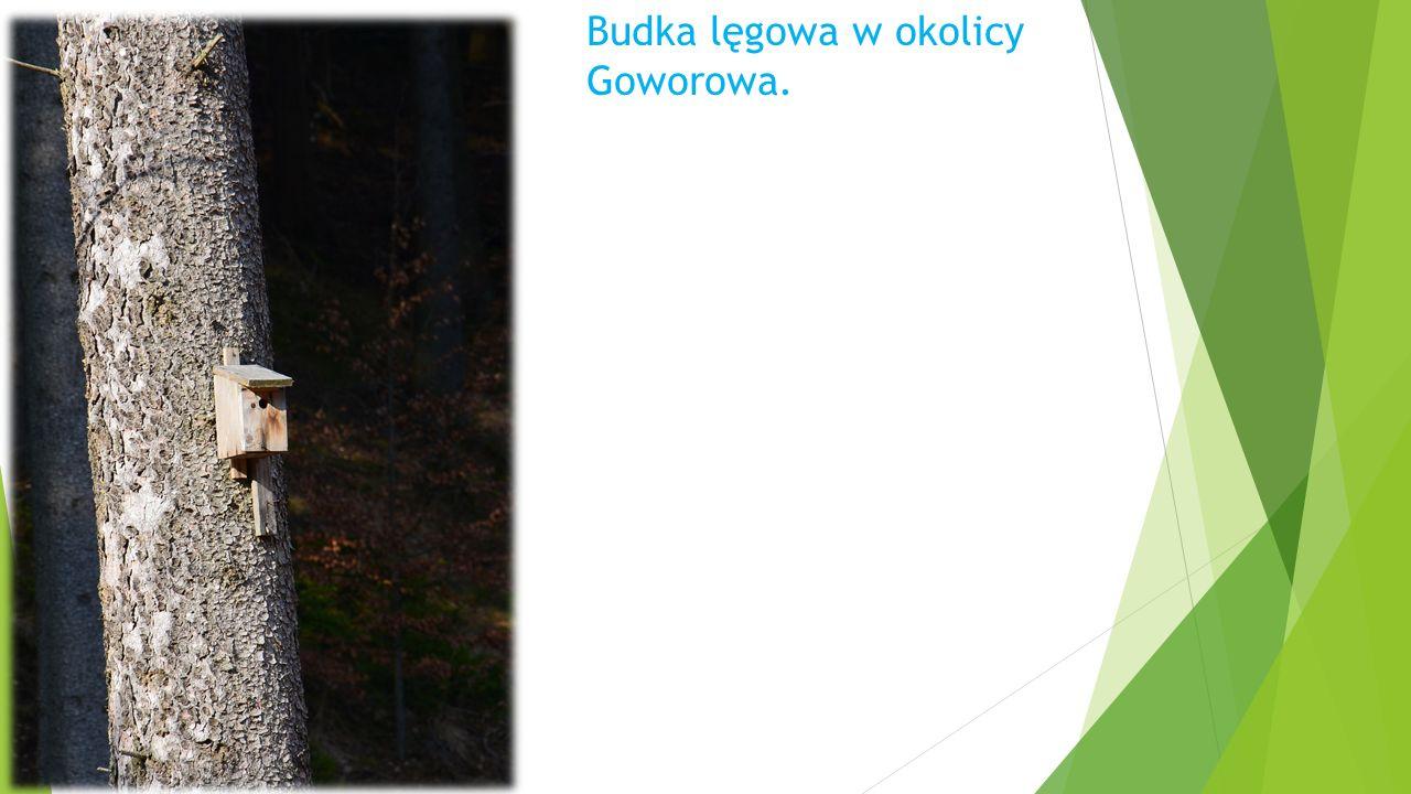 Budka lęgowa w okolicy Goworowa.