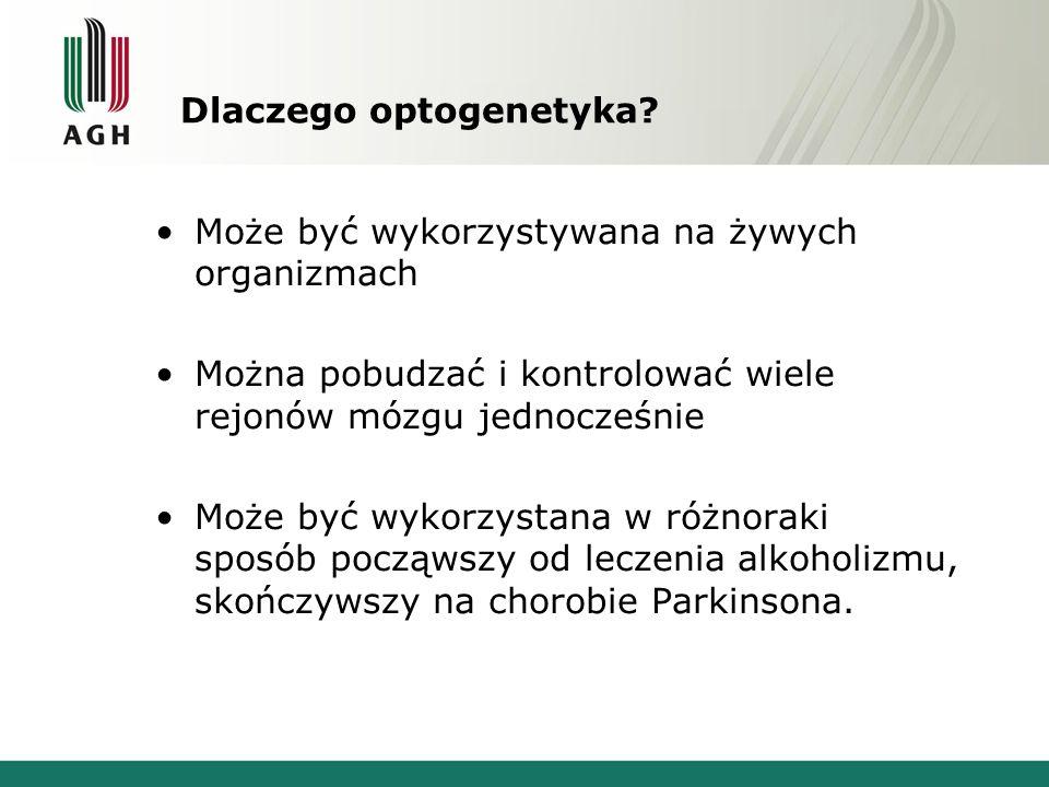 Jak to działa ? www.agh.edu.pl