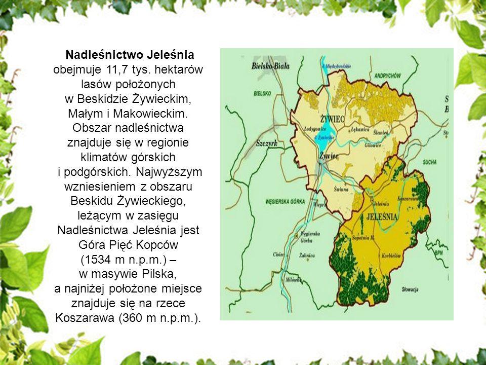 Nadleśnictwo Jeleśnia obejmuje 11,7 tys. hektarów lasów położonych w Beskidzie Żywieckim, Małym i Makowieckim. Obszar nadleśnictwa znajduje się w regi
