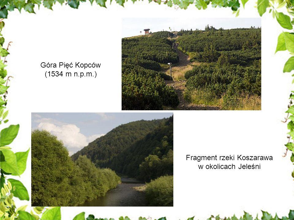 W lasach Nadleśnictwa Jeleśnia dominującym gatunkiem jest świerk, zajmujący około 60% powierzchni leśnej, następnie buk i jodła o udziałach wynoszących odpowiednio 22% i 15% powierzchni.