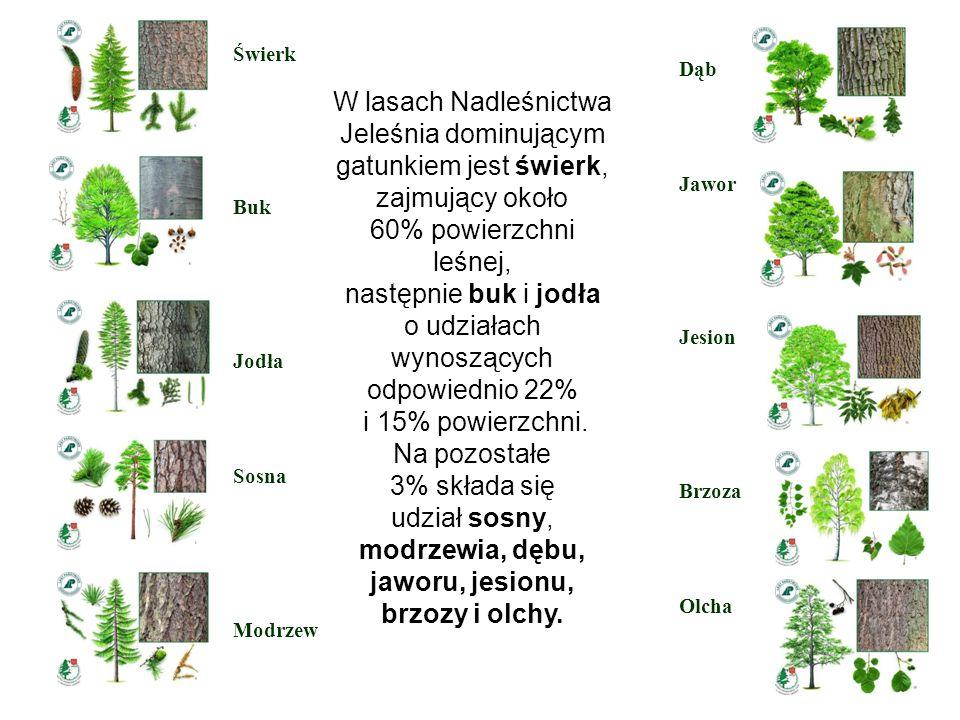 W lasach Nadleśnictwa Jeleśnia dominującym gatunkiem jest świerk, zajmujący około 60% powierzchni leśnej, następnie buk i jodła o udziałach wynoszącyc