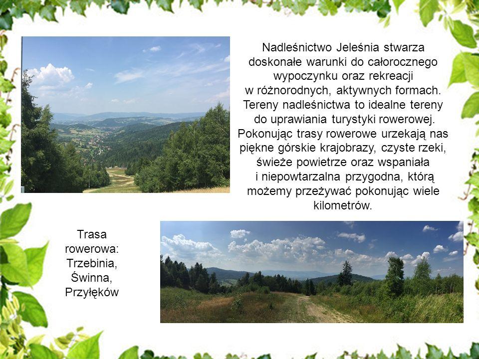 Nadleśnictwo Jeleśnia stwarza doskonałe warunki do całorocznego wypoczynku oraz rekreacji w różnorodnych, aktywnych formach.
