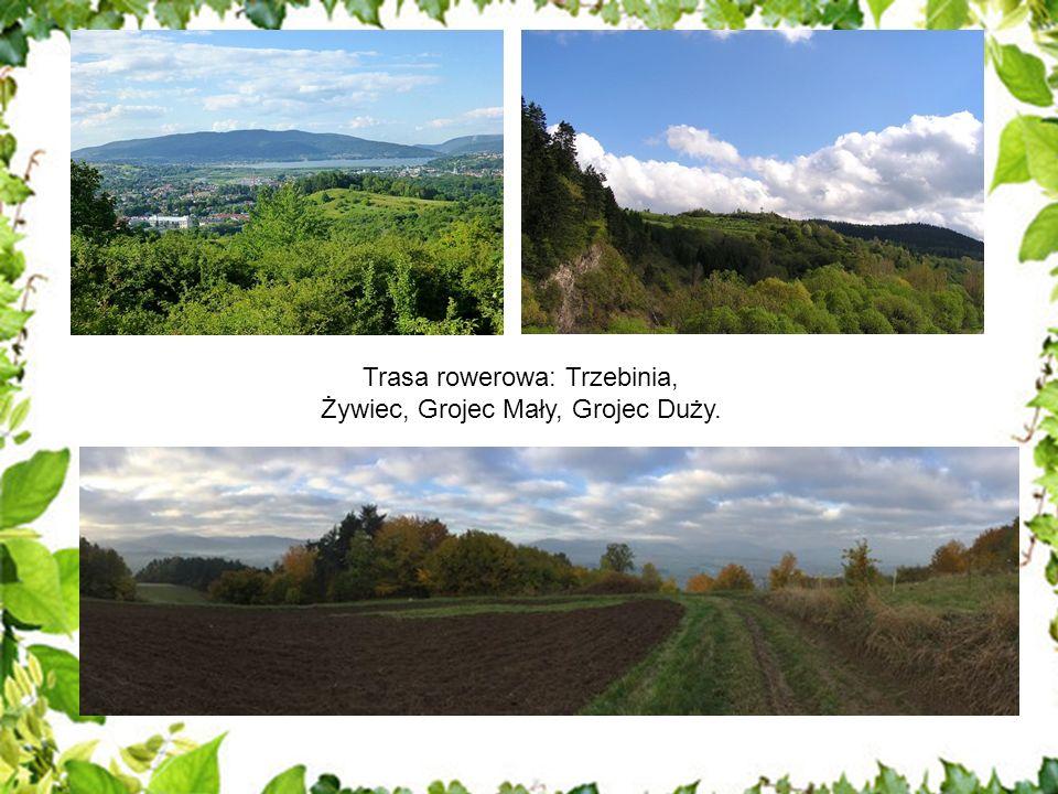 Malownicze tereny Nadleśnictwa Jeleśnia to wprost idealne miejsce do aktywnego spędzenia czasu.