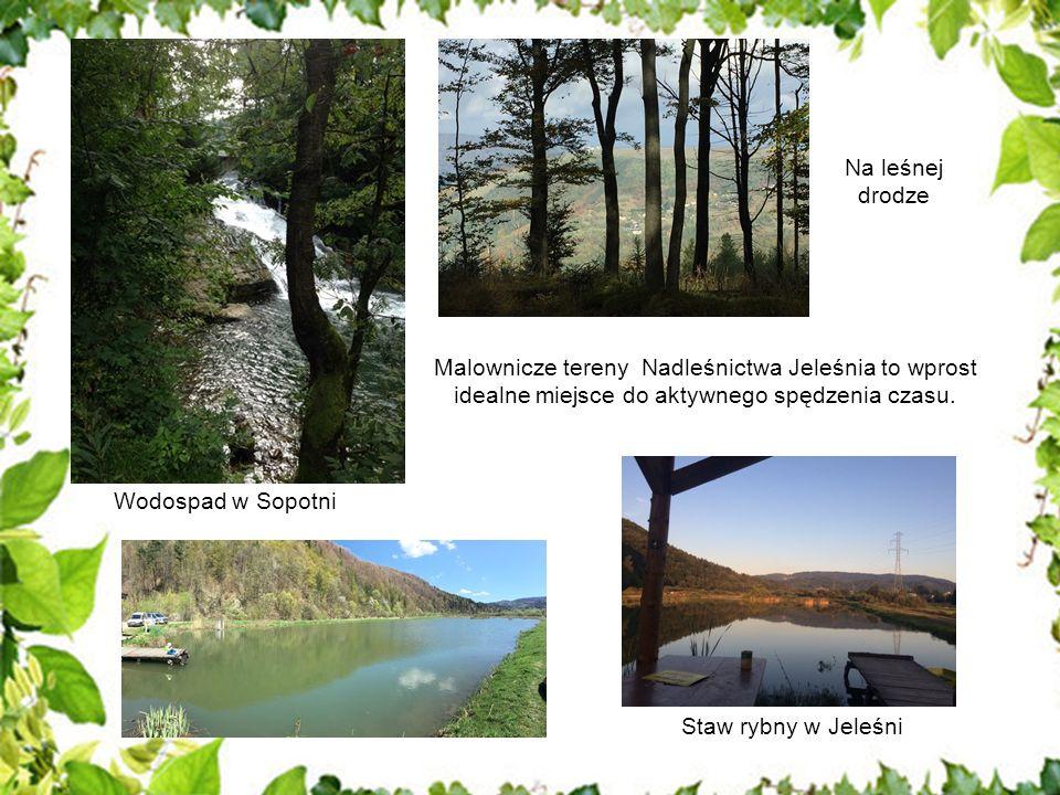 Malownicze tereny Nadleśnictwa Jeleśnia to wprost idealne miejsce do aktywnego spędzenia czasu. Wodospad w Sopotni Na leśnej drodze Staw rybny w Jeleś