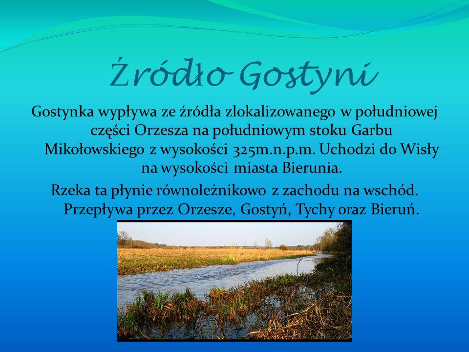 Ź ród ł o Gostyni Gostynka wypływa ze źródła zlokalizowanego w południowej części Orzesza na południowym stoku Garbu Mikołowskiego z wysokości 325m.n.