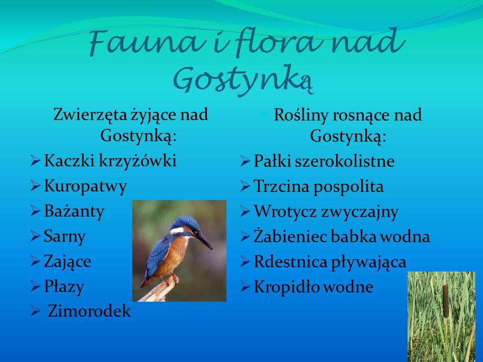 Fauna i flora nad Gostynk ą Zwierzęta żyjące nad Gostynką:  Kaczki krzyżówki  Kuropatwy  Bażanty  Sarny  Zające  Płazy  Zimorodek Rośliny rosną