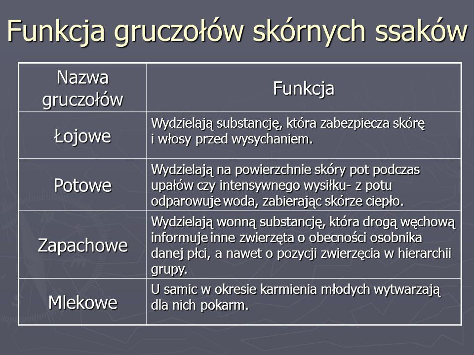 Przystosowania do środowiska Ssaki nadrzewne - np.